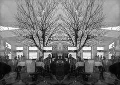 F_MG_9115-BW-1-Canon 6D2-Tamron 28-300mm-May Lee 廖藹淳 (May-margy) Tags: maymargy bw 黑白 photoshop 擴充橫幅練習 街拍 線條造型與光影 天馬行空鏡頭的異想世界 心象意象與影像 台灣攝影師 聖馬利諾共和國 幾何構圖 點樹 樹木 玻璃窗 反射 鏡影 fmg9115bw1 glasswindow restaurant tree mirrorimage linesformsandlightandshadow streetviewphotography mylensandmyimaginaiton natural coincidence thru lenstaiwan photographerhuman geometryhuman elementconstitution san marinocanon 6d2tamron 28300mmmay lee 廖藹淳