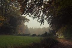 An Autumn Painting from the Eifel (Netsrak) Tags: baum bäume eu eifel europa europe forst landschaft natur nebel wald fog landscape mist nature tree trees woods