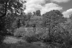 Manifold (Tony Tooth) Tags: nikon d7100 sigma 1750mm river countryside valley rivermanifold wettonmill staffs staffordshire bw blackandwhite monochrome england