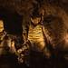 Walrus? Carlsbad Caverns National Park
