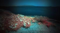* (Timos L) Tags: ir infrared modified digital 590nm seaside seascape feelscape flowers sea pinhole pinwide wanderlust olympus pen ep1 timosl
