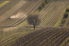 Moravian Tuscany (Andrew G Robertson) Tags: vineyard moravia south morovian tuscany czech republic czechia farm tractor farmer