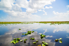 Florida (Yuri Figuenick) Tags: landscape florida summer reflection clouds sky water pond lake green nature blue canon eos 5d mark3 art trip travel lotus leaves sawglass