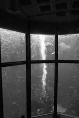 Diver (Mrs Bs Photos) Tags: montereyaquarium