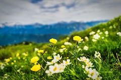 Blooming Meadow (*Capture the Moment*) Tags: 2019 clouds fotowalk friaul himmel landscape landschaft sky sonya7m2 sonya7mii sonya7mark2 sonya7ii sonyilce7m2 tamron2875mmf28diiiirxd wetter wolken cloudy wolkig