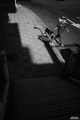 (默德) Tags: httpmadkuocom madkuo snapshot streetphoto streetphotography streetshot 紀實 紀實攝影 街拍 街頭攝影 默德 中正區 臺北市 中華民國