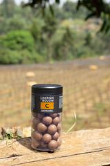 Kieni Feb 2019 (Coffee Collective) Tags: coffee kenya directtrade nyeri kieni mugaga karatina coffeecollective
