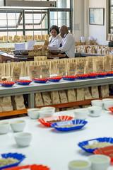 Time for cupping fresh crop Kieni (Coffee Collective) Tags: coffee kenya directtrade nyeri kieni mugaga karatina coffeecollective
