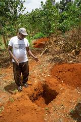 Joseph Ngari showing a new technique for planting new trees (Coffee Collective) Tags: coffee kenya directtrade nyeri kieni mugaga karatina coffeecollective
