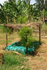 Joseph Ngari's own small nursury (Coffee Collective) Tags: coffee kenya directtrade nyeri kieni mugaga karatina coffeecollective