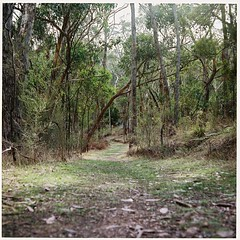Australian Countryside (Helen C Photography) Tags: mamiya c220 film kodak portra 400 australia country nature gumtrees analogue