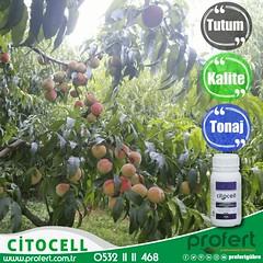 profert-çiçek (Profert Gübre) Tags: şeftali meyvecilik meyve sebze sebzecilik seracılık sera seed fertilizer profert fertili