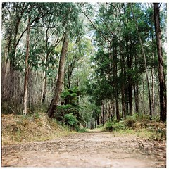 Australian Countryside (Helen C Photography) Tags: mamiya c220 film kodak portra 400 australia country nature gumtrees analogue noojee victoria