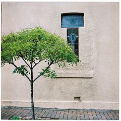Urban scene (Helen C Photography) Tags: architecture tree urban street house stainedglass window abstract mamiya c220 analogue film kodak portra 400
