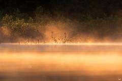 ''La simplicité!'' (pascaleforest) Tags: paysage landscape passion nikon nature wild wildlife faune québec canada brume mist simplicité light lumière