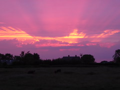 The Beacon (Gilder Kate) Tags: beacon sunset redskyatnight redsky firesky beaconfield therfield hertfordshire royston panasoniclumixdmctz70 panasoniclumix panasonic lumix dmctz70 tz70 cows bullocks