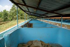 Fermentation tanks (Coffee Collective) Tags: nyeri nyericounty kenya
