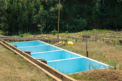 Konyu soaking tanks (Coffee Collective) Tags: nyeri nyericounty kenya