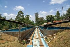 Washing channels (Coffee Collective) Tags: nyeri nyericounty kenya