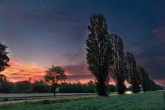 Pappelallee (markusgeisse) Tags: morning morgen sonnenaufgang sunrise orange tree poplar pappel allee avenue spring road sky