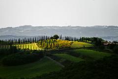 _VO25961 (Foto Massimo Lazzari) Tags: montalcino