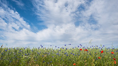Summertime in Lubbeek (BE) (de_frakke) Tags: hageland akker field poppys cornflowers lubbeek