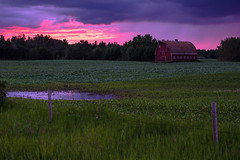 Red barn; New Sarepta area (Image 3) (Martin Thielmann) Tags: ab leducco newsarepta barbedwirefence earlygrowthstagecanola magentasky redbarn stormyeveningskies waterpuddle workingbarn