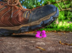These boots are made for walking, and that's just what they'll do. (Darren Speak) Tags: dof lowdown flower boot foot