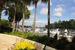 Harbour (Hilton Head) (ToJoLa) Tags: canon canoneos60d summer island southcarolina sc vakantie vacation zomer 2019 hiltonhead harbour boat tree palmetto cloud sky blue