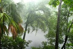 Its raining on Hilton Head (shower rain) (ToJoLa) Tags: canon canoneos60d summer island southcarolina sc vakantie vacation zomer 2019 hilton head regen rain hiltonhead