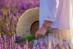 Nel campo di lavanda (mariateresa toledo) Tags: lavanda lavender provenza provence donna woman dettagli details mano hand sonya7riii mariateresatoledo dsc02780