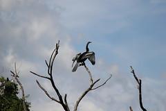 Ibis Pond, Pinckney Island (ToJoLa) Tags: canon canoneos60d summer island southcarolina sc vakantie vacation zomer 2019 nationalparkwildliferefuge pinckneyisland hiltonhead