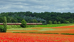 Steaming Past! (Macro light) Tags: severnvalleyrailway worcestershire poppies poppyfields bewdley steamtrains