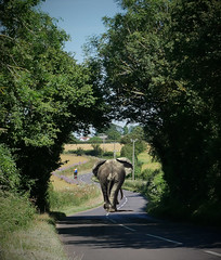A trunk road? (John Spooner) Tags: road elephant cyclist tree arch composite gimp odiham longlane hampshire ngorongoro tanzania bum