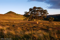 Hawnby Hill (Dave Snowdon (Wipeout Dave)) Tags: davidsnowdonphotography canoneos80d landscape hawnbyhill northyorkshire northyorkmoors moors hill trees grass evening summer