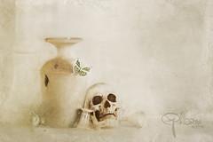 dissolving (Ephorea) Tags: death transformation mementomori butterfly vanitas life white decoration interior skull transcience texture structure brush circle stilllife dissolve dissolving vanish time hour flickrunitedaward transmutation ephorea still silence
