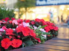 Impatiens (Andrei Manoliu) Tags: impatiens bokeh evening flowers f28 microfourthirds olympus omd mft 1240mmf28pro bench lights flowerscolors
