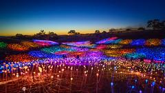 Field of Light (atenpo) Tags: sensorio field light paso robles bruce munro art installation fiber optics solar central coast ca california highway 46