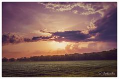 Loving you at Sunset (Stathis Iordanidis) Tags: sunset sundown sun romantic dramatic clouds sky grass grassland corbs agriculture farm farmland nature countryside silence wind serenity wachtendonk nrw niederrhein germany