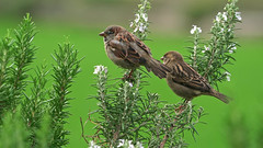 Ο Θεός έθεσε όρια για τα διάφορα πουλιά και τα θηρία, τα ψάρια, τα έντομα και όλα τα φυτά (dallaseffitgew5696) Tags: εκκλησίατουπαντοδύναμουθεού παντοδύναμοσθεόσ αστραπήτησανατολήσθεόσ αιώνιαζωή δευτέραπαρουσία ευαγγέλιο χριστιανισμόσ χριστόσ ιησούσ σωτήρασ ηαγάπητουθεού ηχιλιετήσβασιλεία πίστη ολόγοστουθεού βασιλείατωνουρανών πίστηστονθεό δόξατωθεώ κυριοσιησουσχριστοσ θελημαθεου πραγματικηαγαπη αγαπηθεου ηφωνητουκυριου ηπροσευχη πουλί πράσινο