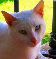 Gatito lindo con ojos preciosos. (In Dulce Jubilo) Tags: animal animals gato cat kitten pet wild andalucia ojos eyes lindo fotografía photography nice naturaleza nature espagne españa spain spanien