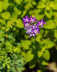 Purple/White Flower (AChucksEyeView) Tags: flower colorful plant nature purple