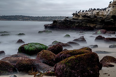 Early Morning (matthew:D) Tags: california lajolla beach ocean rocks motion water birds nature foreground unitedstates morning landscape waves