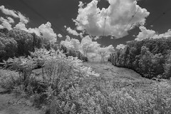 Transmission over Trail (4 Pete Seek) Tags: blackandwhite bw trek blackwhite infrared bikeride whiteandblack silvercomet supercolor silvercomettrail infraredblackandwhite infraredconvertedcamera lifepixels trek21 590nm supercolorinfrared supercolor590nm silvercometbikeride