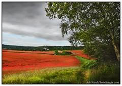 Field of dreams (Ade Ward Phototherapy.) Tags: englandhas scenery landscape sigma nikon worcestershire poppyfields poppy beautiful