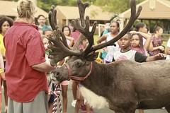 Spruce Run Farm Reindeer