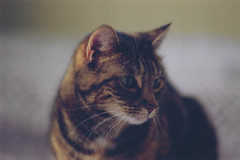Soft (White Mountain Photos) Tags: pentax k1000 kodak gold 200 cat portrait film