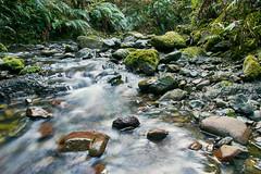 20190630-DSC_2664 (wangxu94) Tags: aotearoa newzealand nature glentuilooptrack forest mountthomasforestconservationarea river water flow longexposure stream canterbury breathtakinglandscapes