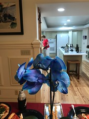 WH: Red, white and blue (enovember) Tags: fourth juky orchid blue wah