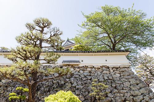 Kochi castle7